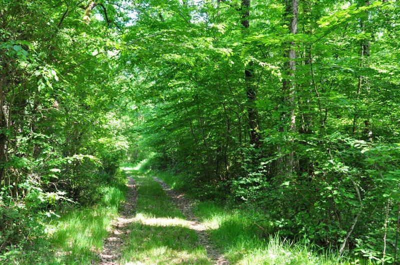 Un des parcours dans la forêt