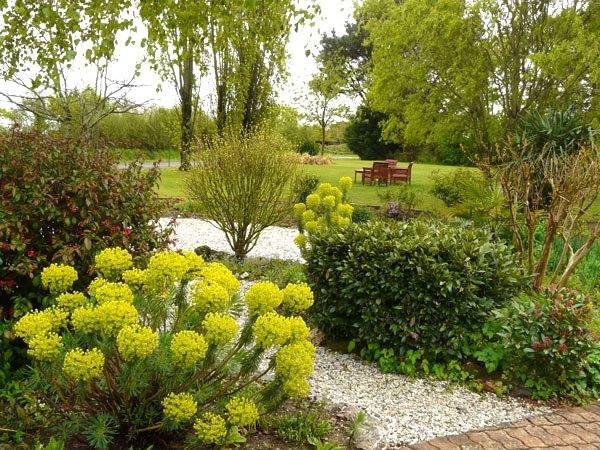 le jardin au printemps (euphorbes en fleurs)