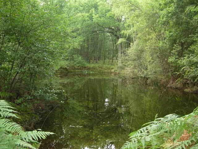 Petit étang privé à 30m de la maison