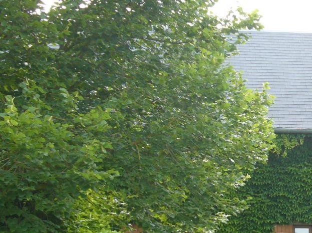 Le gîte d'Anaïs vu du jardin