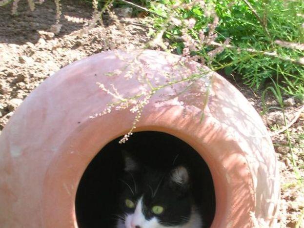FELIX, l'un de nos chats