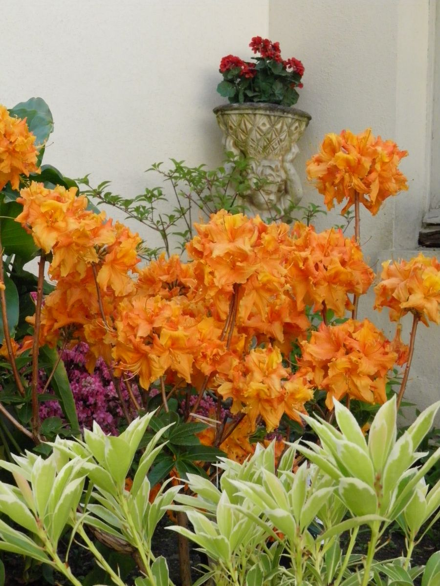 des fleurs du jardin