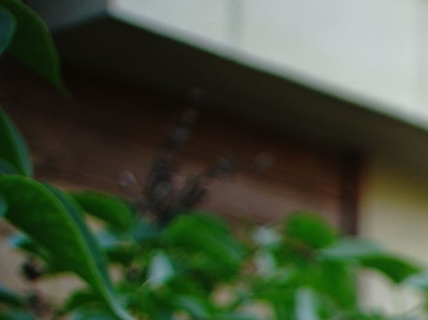Photo 1/13