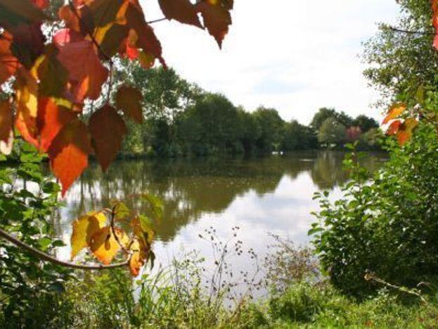 L'automne à l'étang