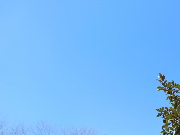 Photo 1/16