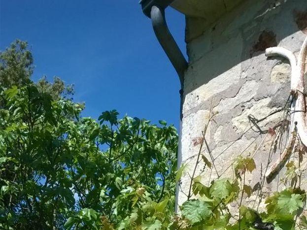Pied de vigne sur la façade. Vue de la chambre sur un parc paysager