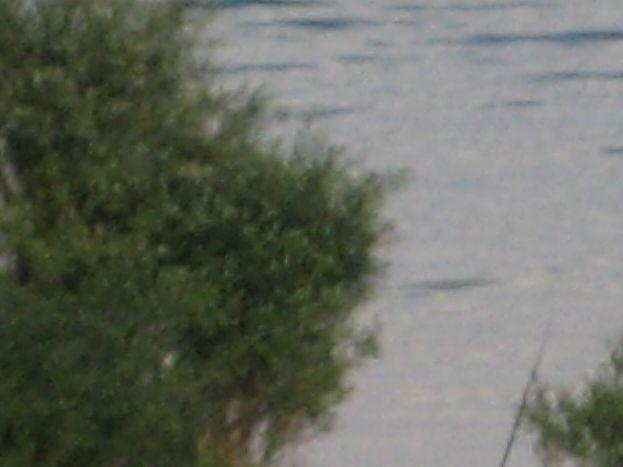 Bonne pêche 51G250 - Les Iris - Outines - Gîtes de France Marne