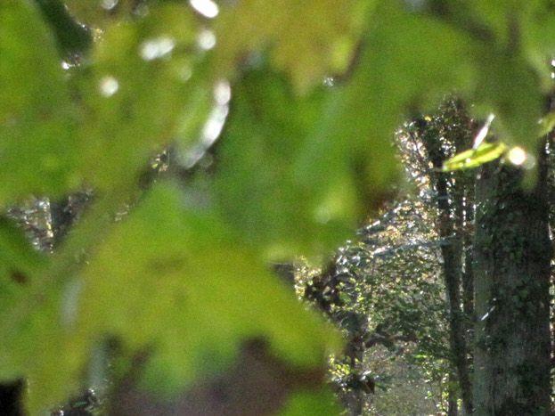 Forêt du Der 51G250 - Les Iris - Outines - Gîtes de France Marne