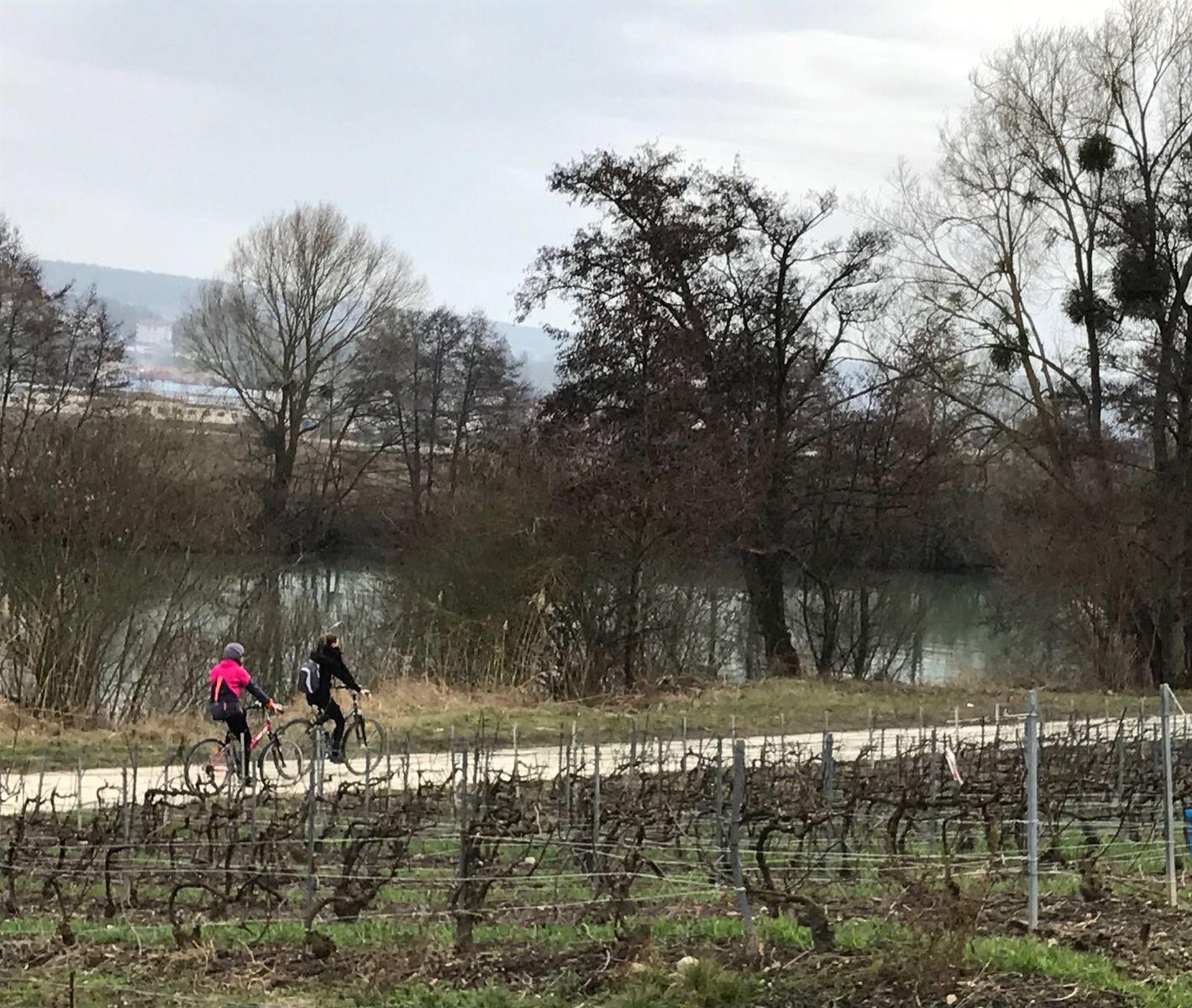 Vélo route du lac du Der à paris 51G472 - La maison du vigneron - Vincelles - Gîtes de France Marne