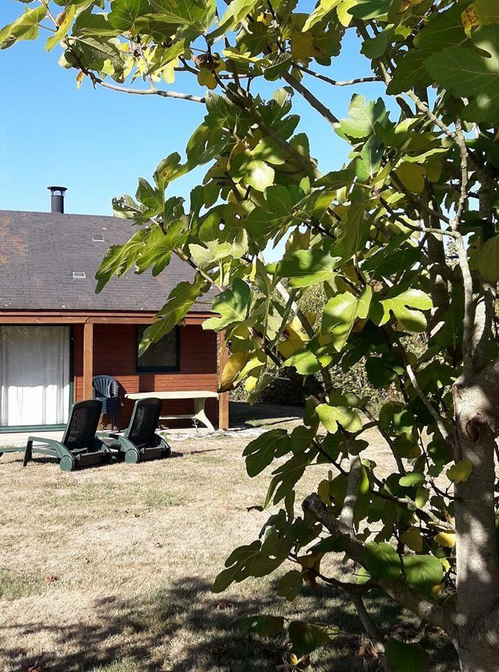 Extérieur, salon de jardin, chaises longues, calme, repos