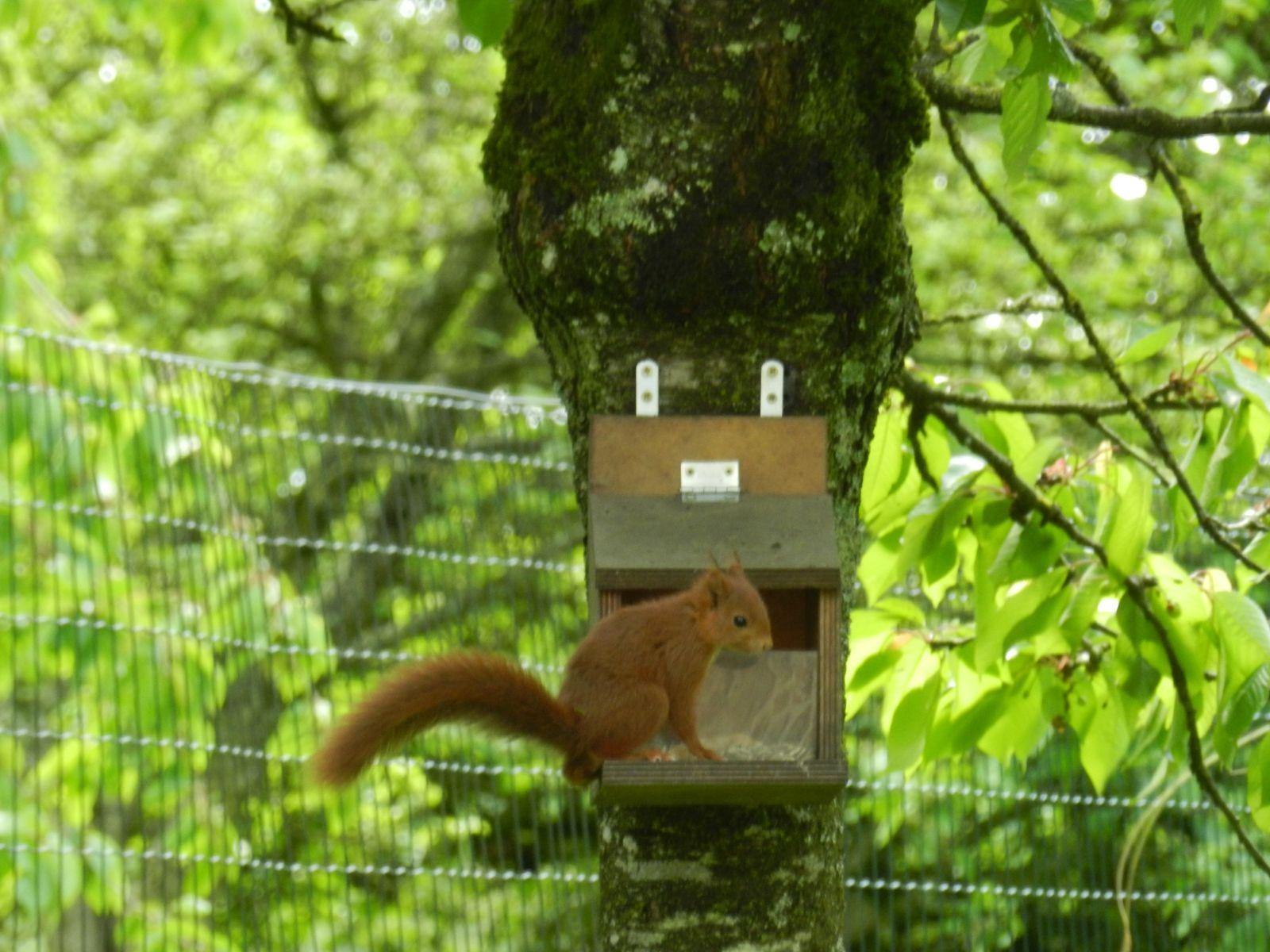 Rencontre avec nos amis les écureuils......