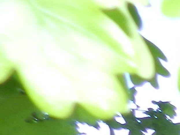 Photo 9/44