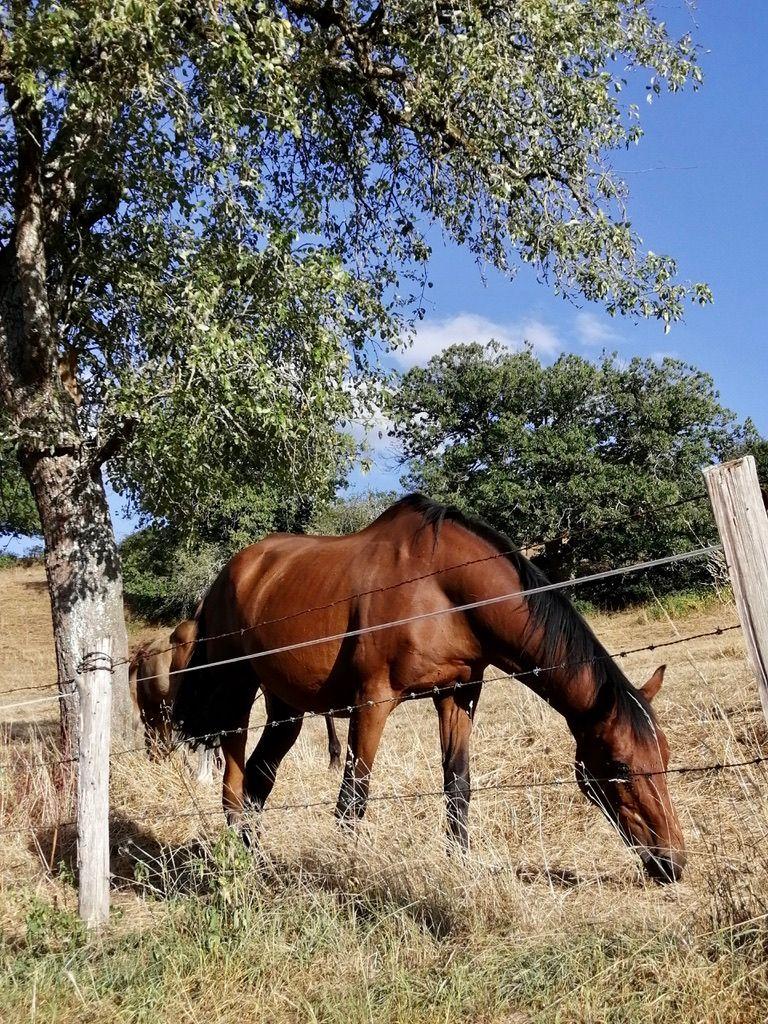Les chevaux de Sainte-Suzanne, à 5 minutes à pied