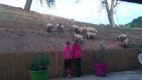 """les voisins """"moutons"""""""