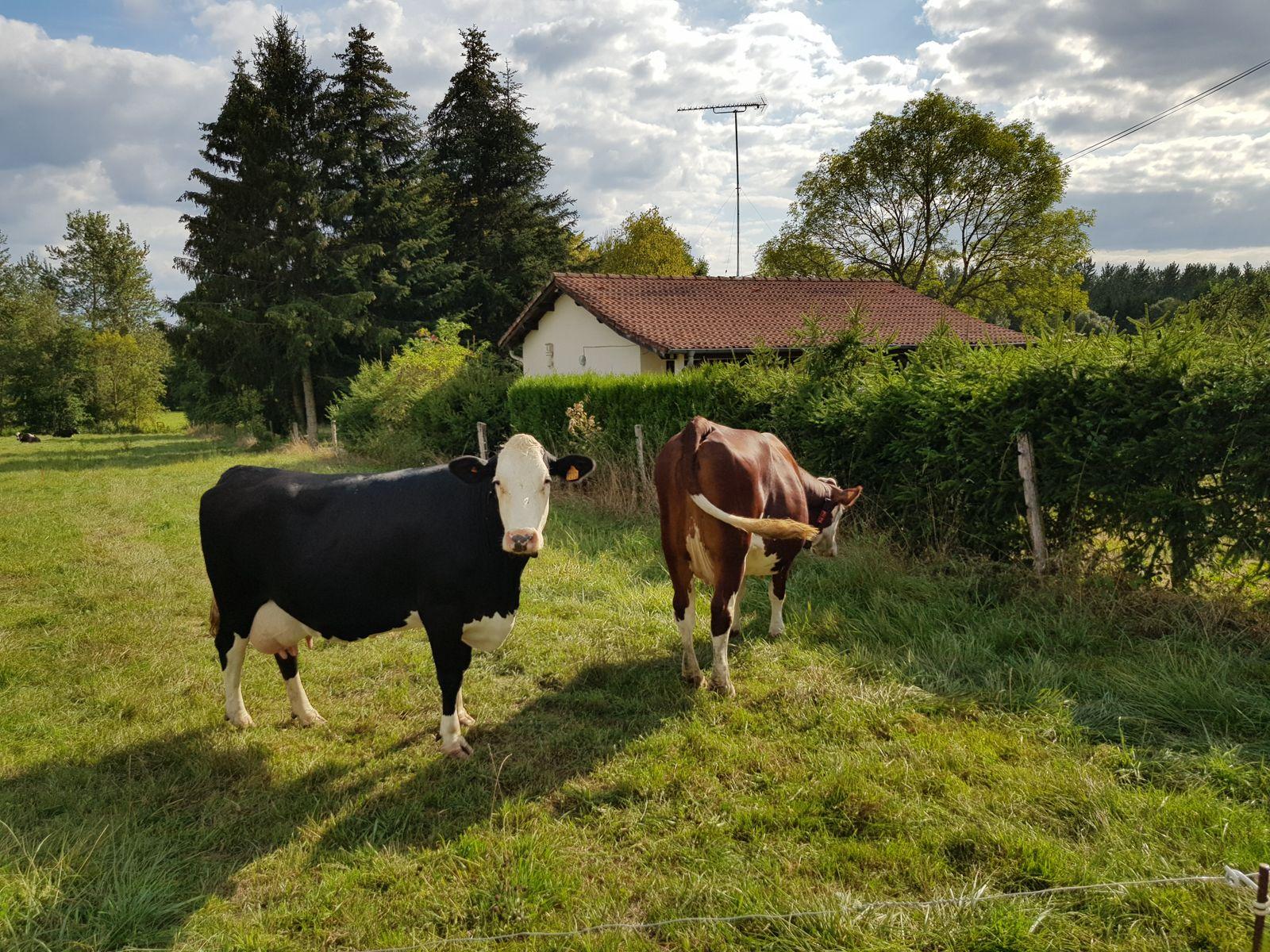 Les voisines