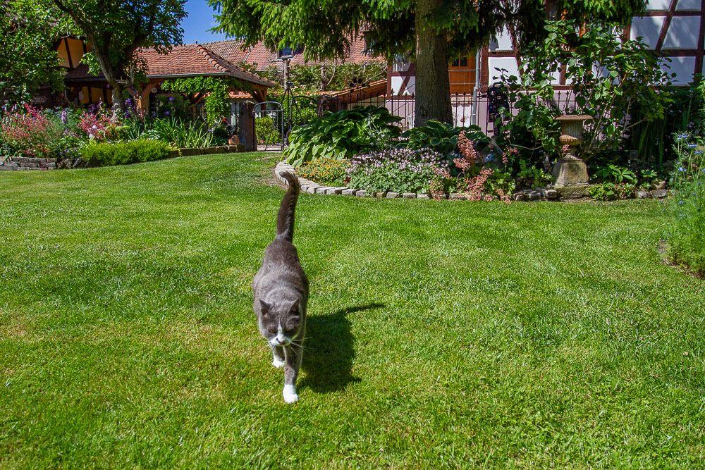 et voici Louane qui rend souvent visite aux visiteurs