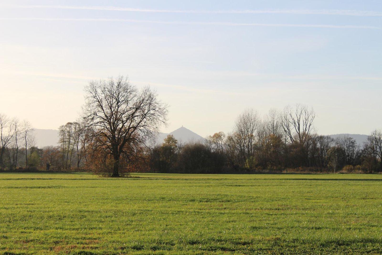 Paysage du Ried autour du gîte à  Muttersholtz-Ehnwihr