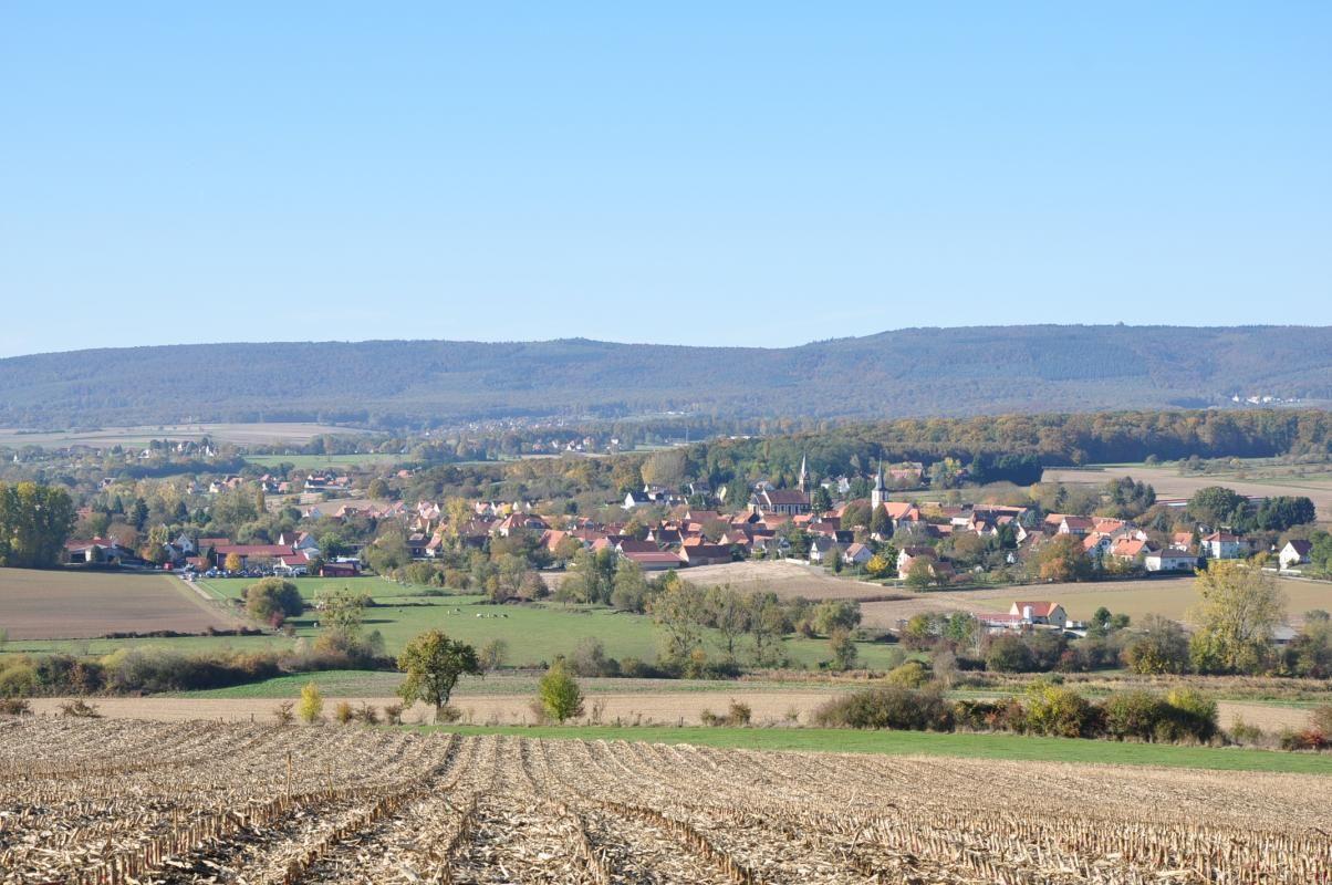 Blotti dans la vallée du Seltzbach