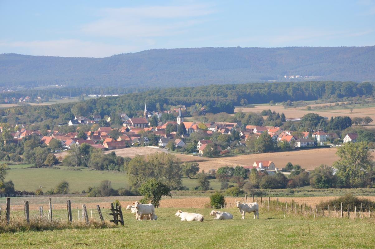 Adossé aux collines sous-vosgiennes,Kutzenhausen