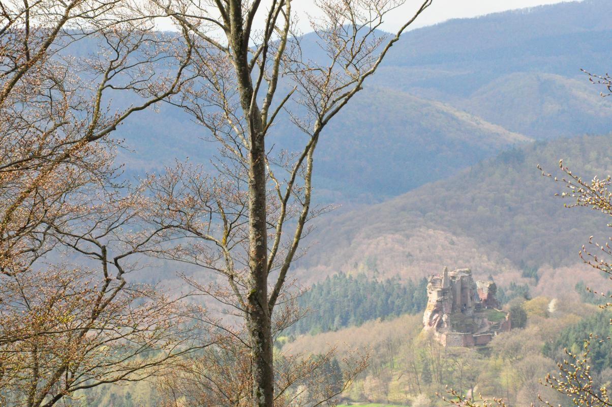 L'un des châteaux forts des environs.