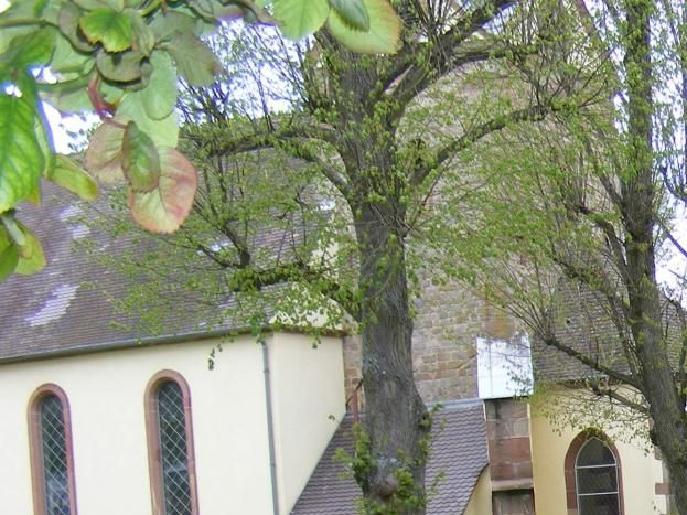 A côté du gîte, vue du jardin, l'une des deux églises, entourée d'un espace de promenade avec tilleuls, fleurs, monuments et verdure.