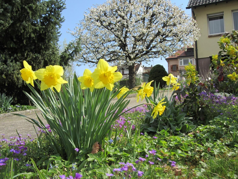Le printemps au Gîte de la Mésange