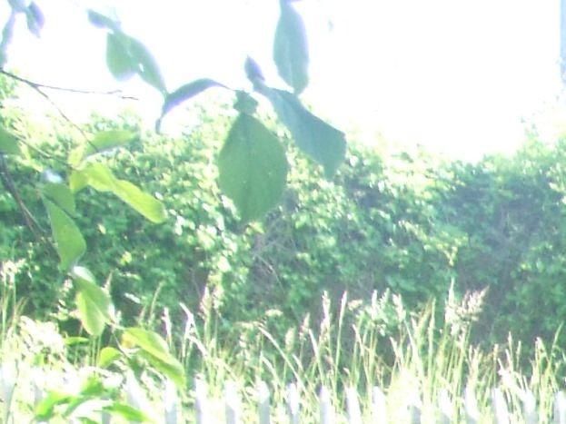 Le jardin des simples (Plantes aromatiques et médicinales)