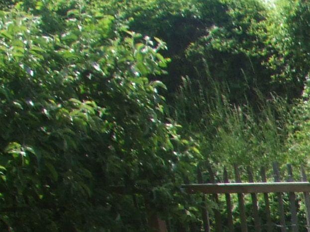 Jardin de Sylvie