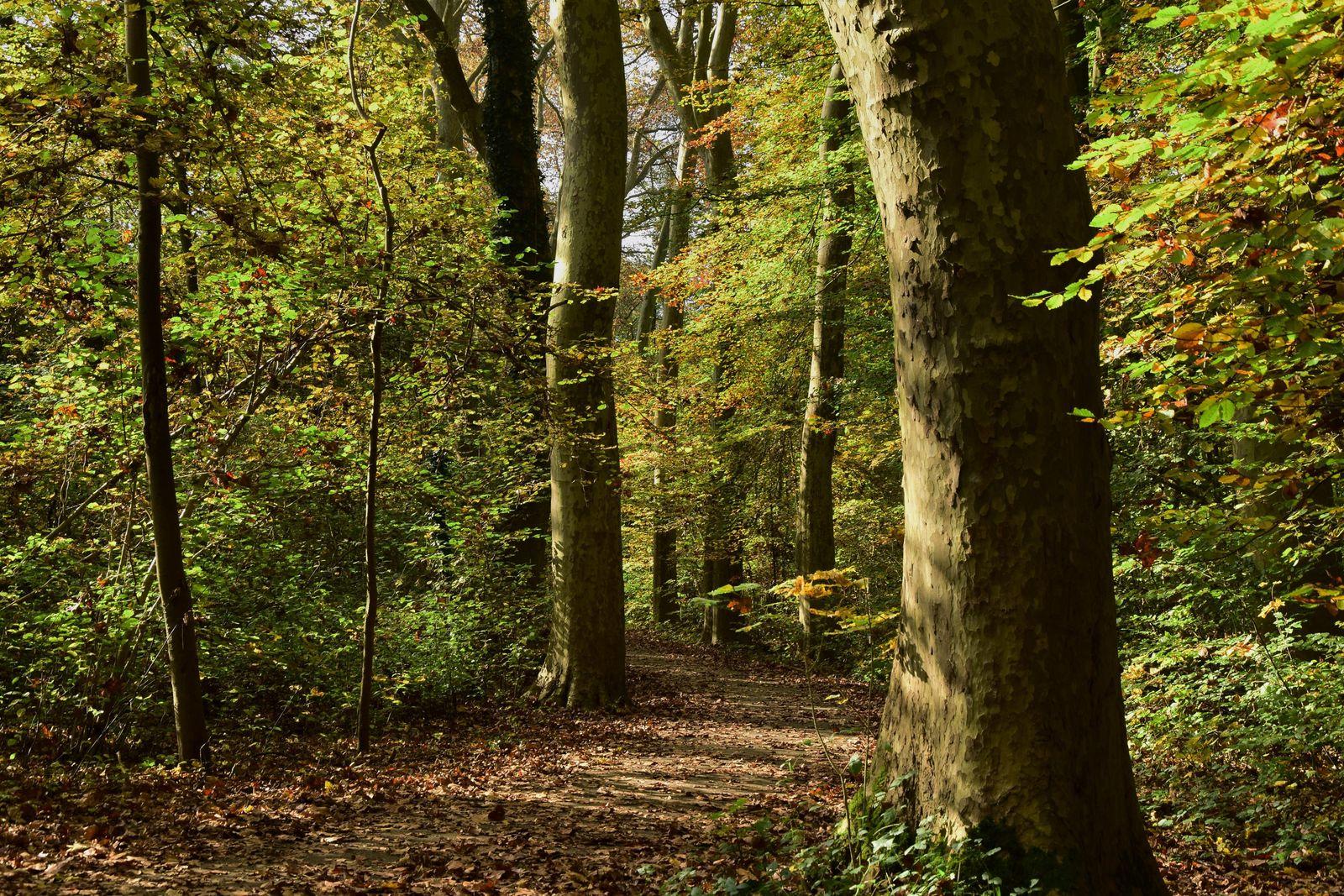 La forêt du Rhin, pour se promener.