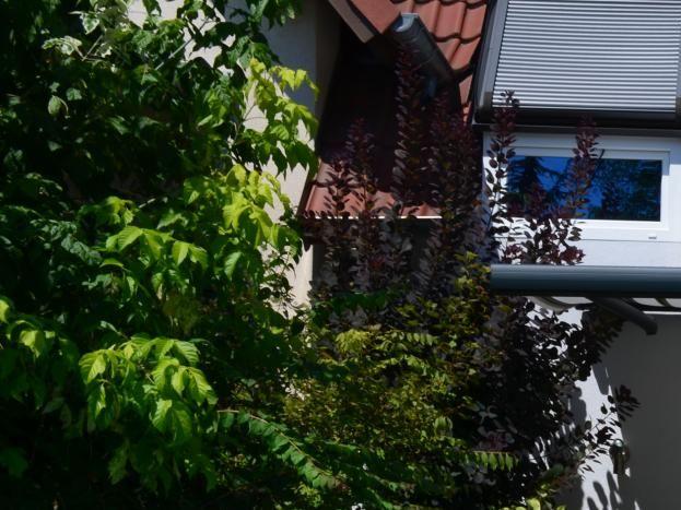 Vue extérieure terrasse sud
