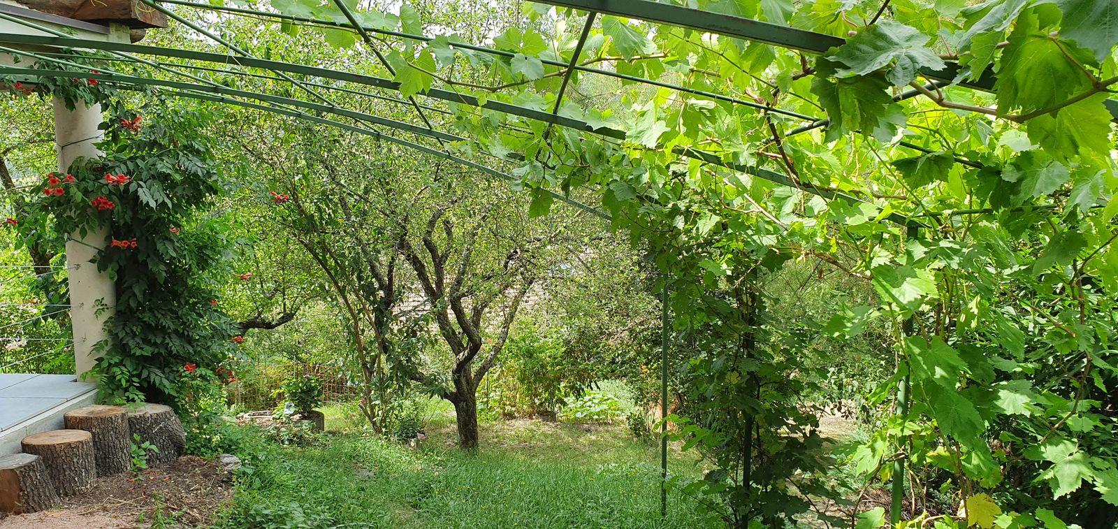 Jardin et pergola