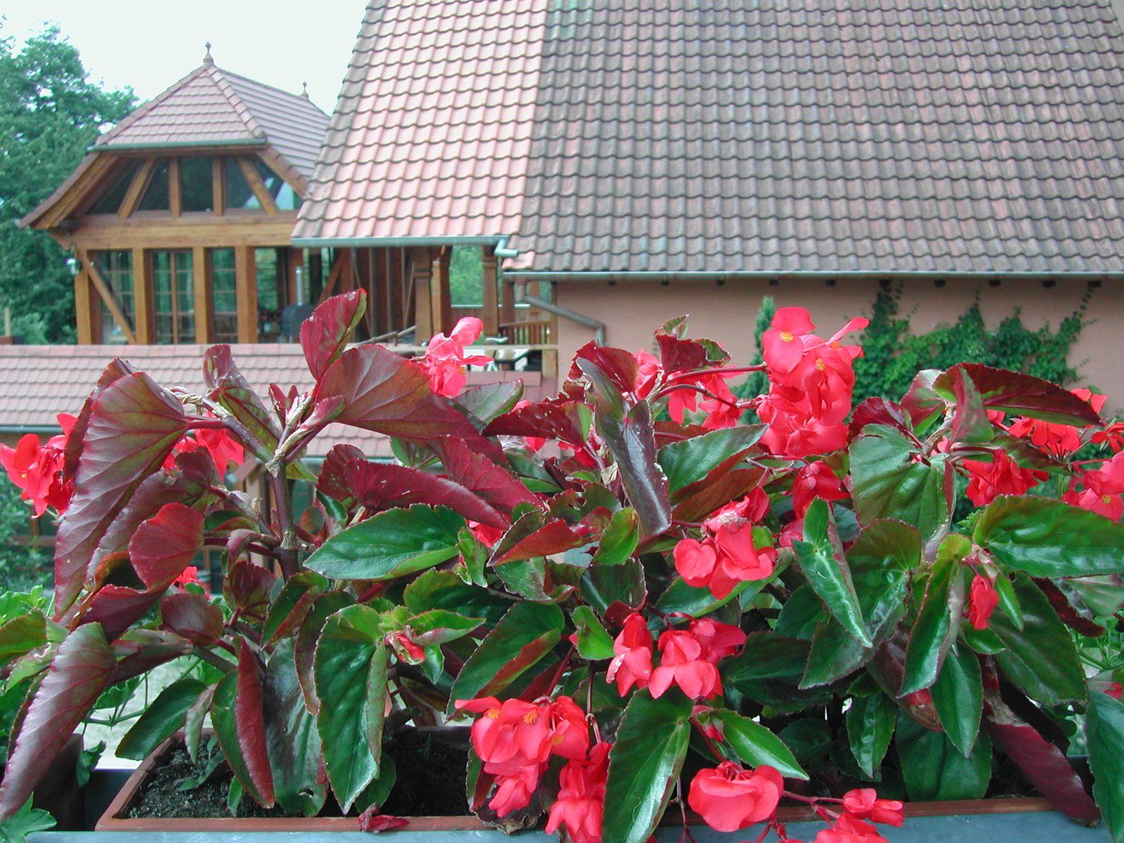 Vue sur la véranda depuis la terrasse de la chambre RIQUEWIHR.