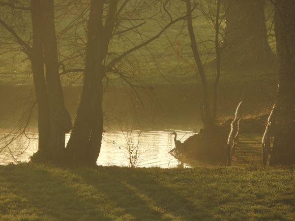 l'étang au réveil
