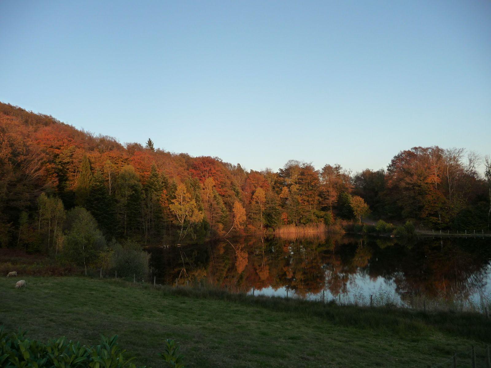 L''étang avec une vue de paysage d'automne..