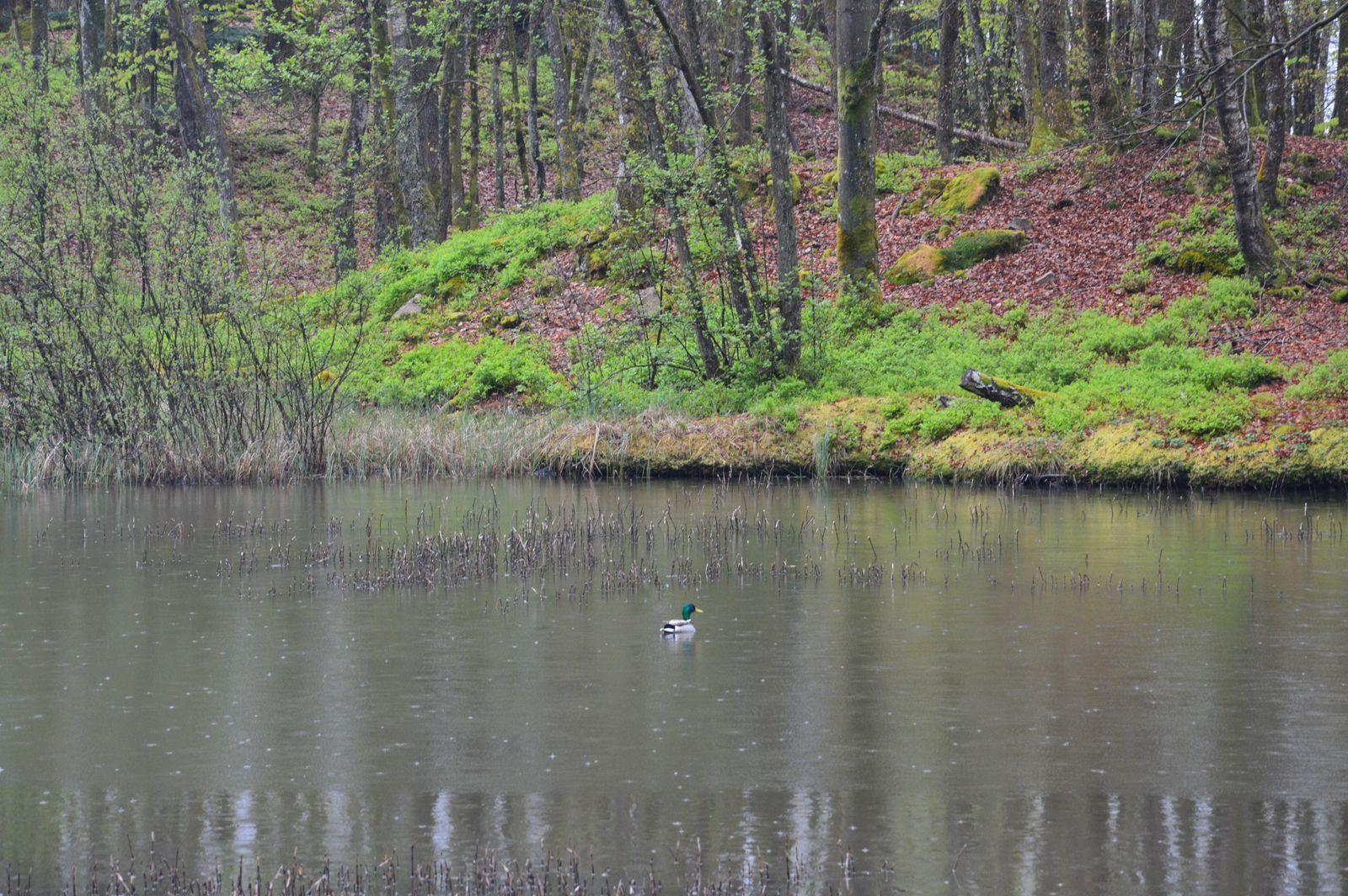 Vue sur l'étang depuis la terrasse du gite