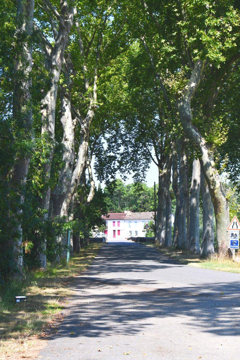 une allée de platanes conduit au village tout proche