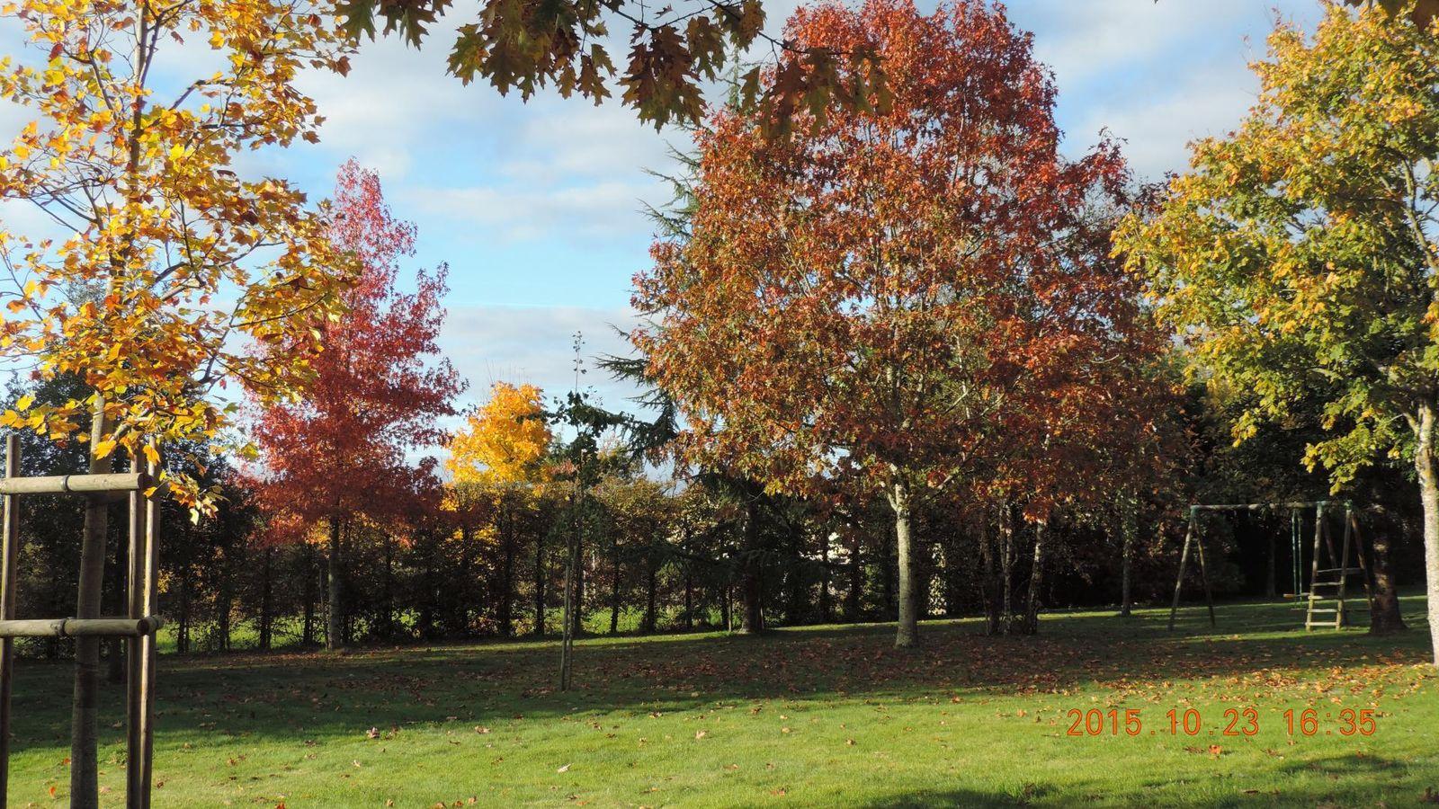 parc à l'automne