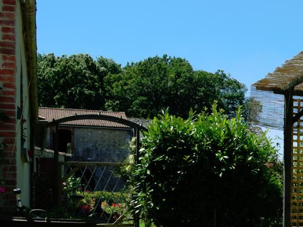 Côté jardin avec pergola