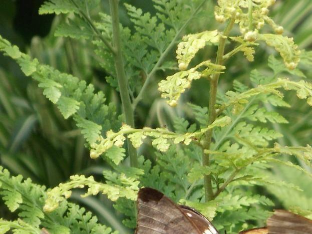 l ile aux papillons Noirmoutier