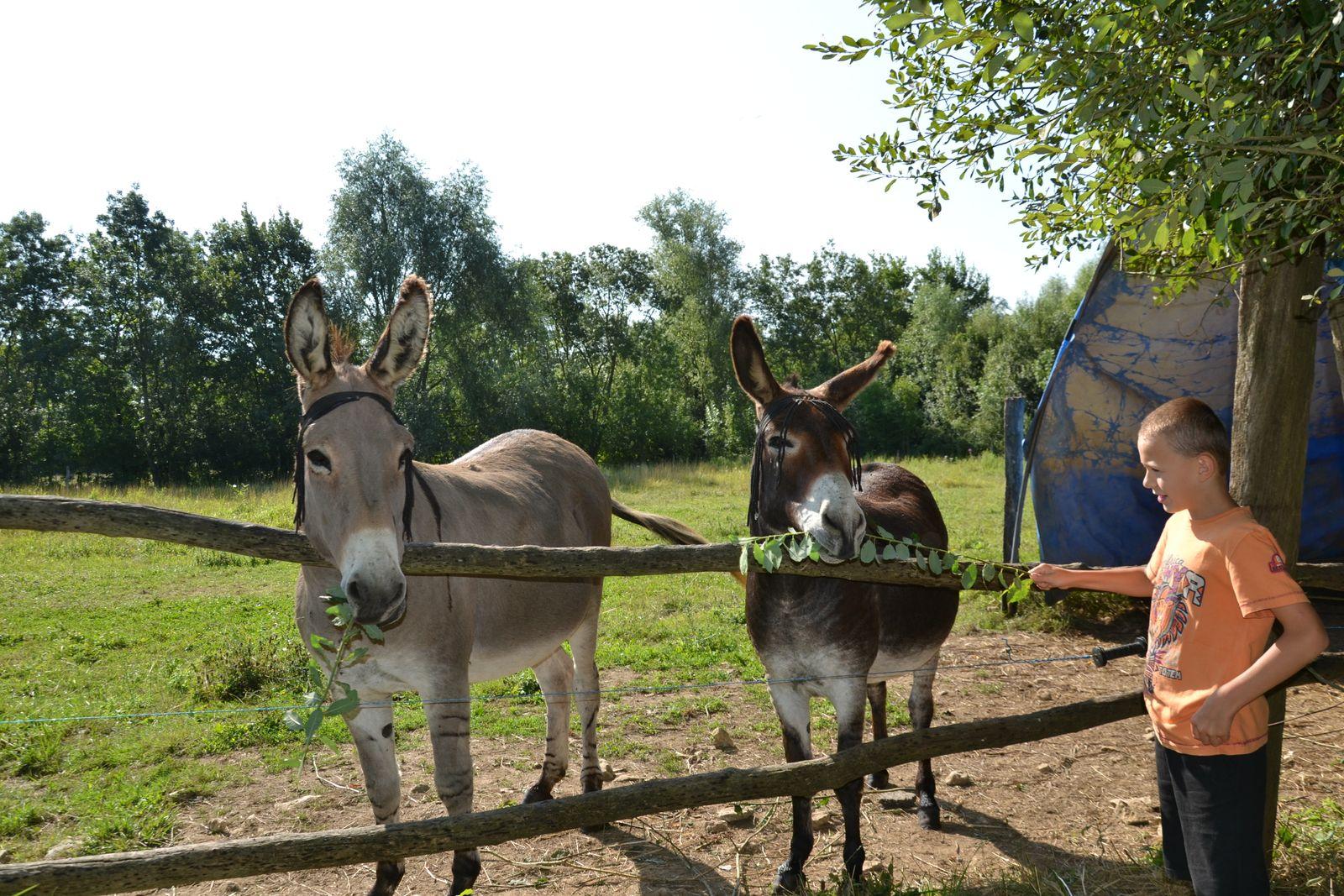 Pepito et Gepetto vous attendent pour une balade dans le marais !