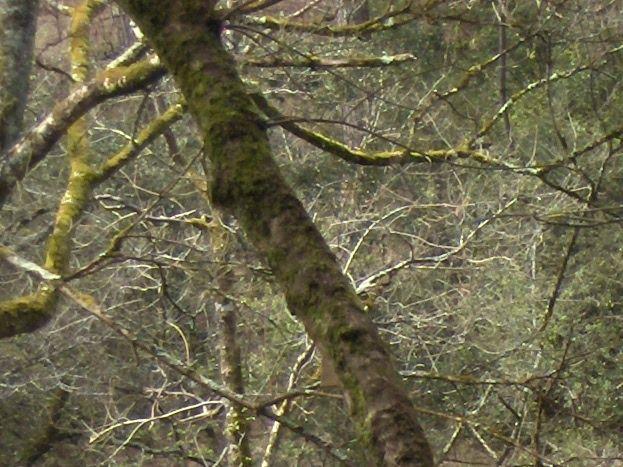 En Forêt, Plan des pistes cyclables