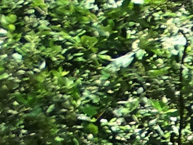 En Forêt, Pistes cyclables à 100 M