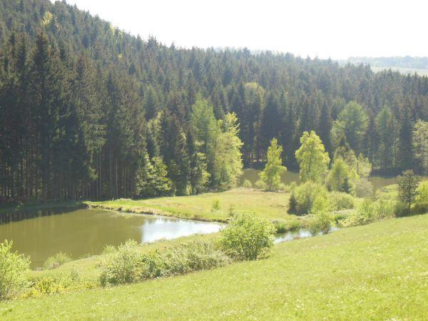 Etangs de pêche et randonnées départ du gîte