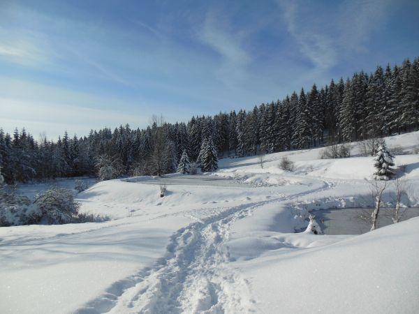 Ballade en raquettes et ski de fond sur place