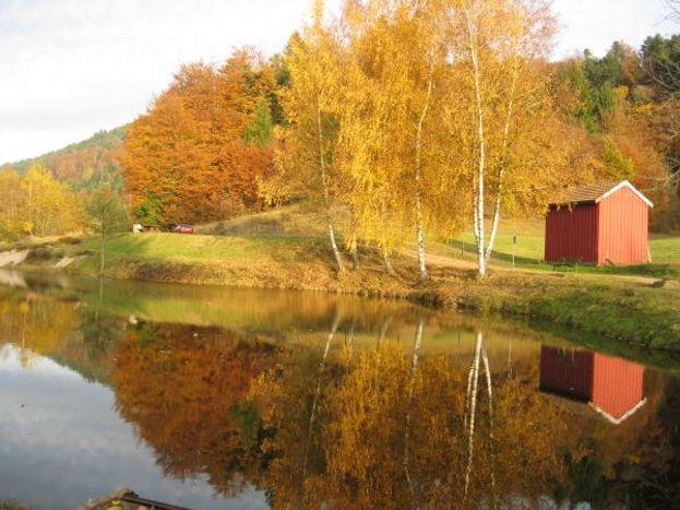 étang de pêche