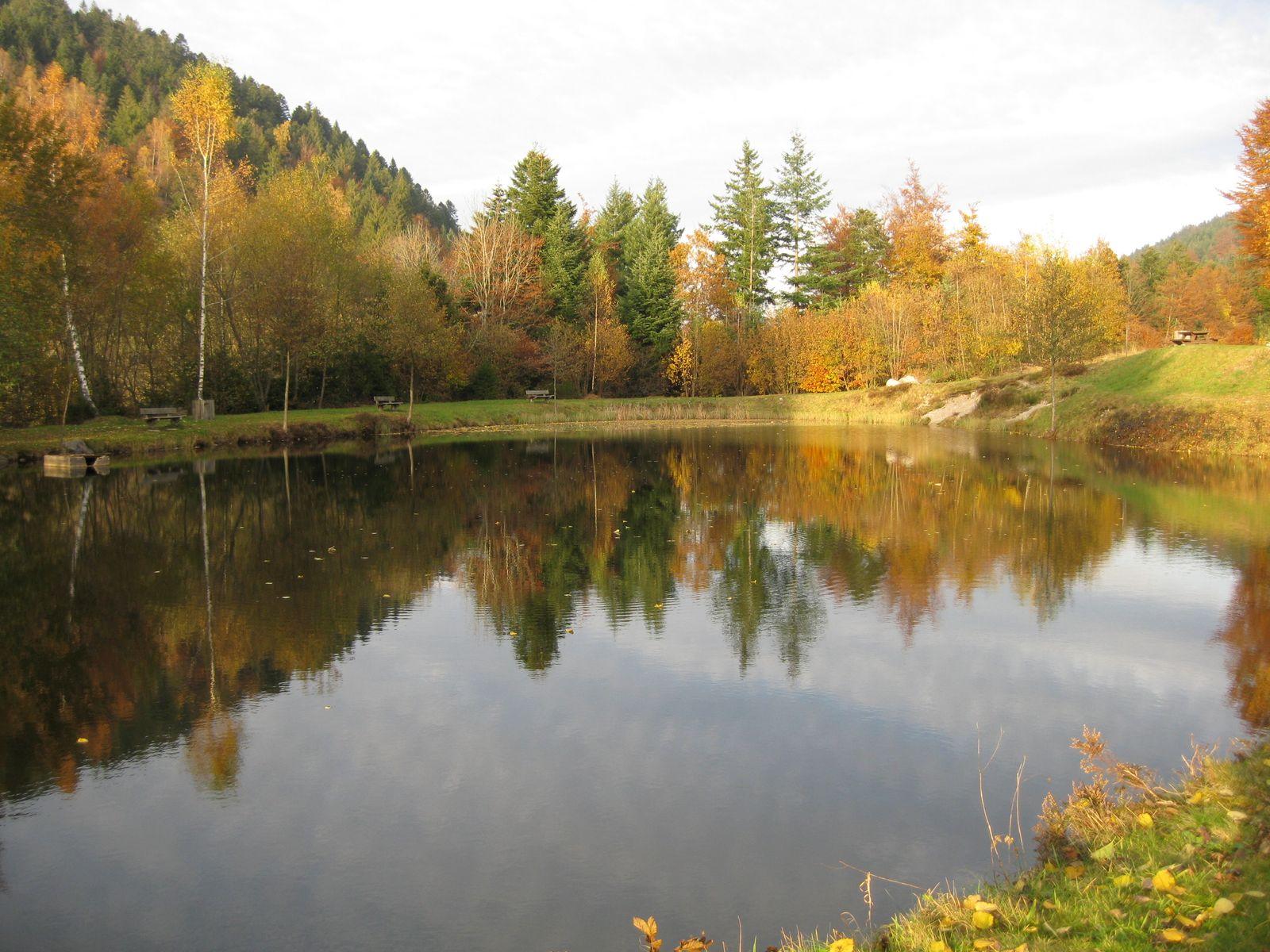 L'étang de pêche au ménil en automne