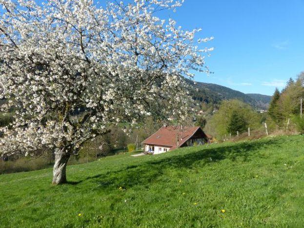 Au printemps