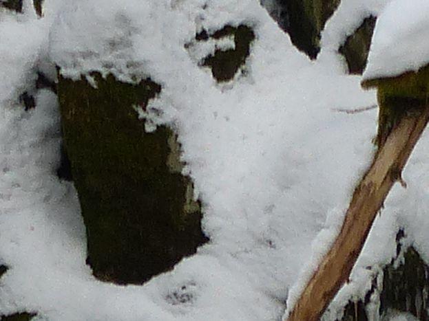 Cascade du Bouchot gelée le 15 janvier 2017